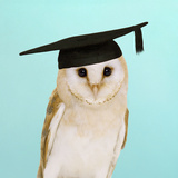 Barn Owl in Mortar Board Photographic Print by Andy and Clare Teare
