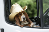 Basset Hound Wearing Hat in Van Photographic Print