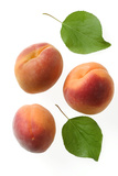Apricot Fruit and Leaves Photographic Print