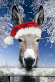 Donkey Looking over Fence Wearing Christmas Hat in Snow Photographic Print