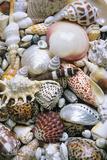 Mixed South Sea Shells Photographic Print