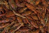 Louisiana Crayfish Fotografisk tryk