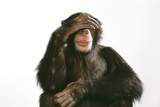 Chimpanzee Hand over Eyes 'See No Evil' Photographic Print