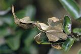 Praying Mantis Female Photographic Print by Alan J. S. Weaving