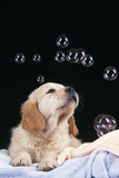 Puppy with Bubbles Photographic Print