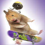 Hamster with Skateboard and Helmet Photographic Print