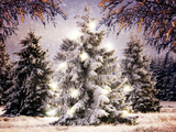 Snow Conifers in Winter Landscape with Christmas Lights Photographic Print