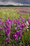 Intensely Flowery Mid-Altitude Prairie Grassland Photographic Print