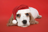 Cocker Spaniel Puppy Wearing Christmas Hat Photographic Print