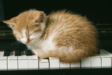 Kitten on Piano-Ginger Photographic Print