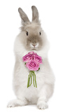 Dwarf Lion-Head Rabbit on Hind Legs Holding Flowers Fotografie-Druck