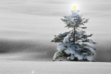 Winter Landscape with Spruce-Fir in Snow with Star on Tree Photographic Print