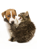 Cat and Dog Norwegian Forest Cat Kitten Miaowing Photographic Print