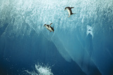Chinstrap Penguins Jumping Off Blue Iceberg Photographic Print