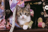 Kitten with Sewing Machine Photographic Print