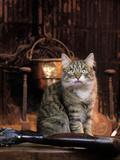Norwegian Forest Cat Photographic Print