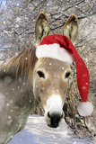 Donkey Wearing Christmas Hat in Snowy Scene Photographic Print