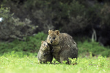 Quokka Female and Young Photographic Print