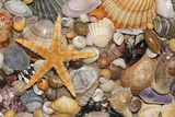 Atlantic Mixed Shells and Starfish on Beach Photographic Print