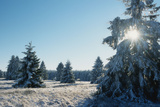 Winter Landscape Spruce Woodland in Snow Photographic Print