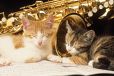 Kittens with Music and Saxophone Photographic Print