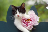 Cute Kitten with Pink Flower Photographic Print