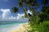 Fiji One of the Best Shelling Beaches in the World Photographic Print