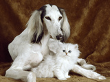 White Dog and Cat Photographic Print