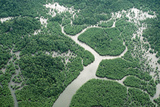 Borneo Aerial of Mangrove Forest Photographic Print