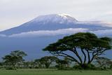 Mt Kilimanjaro in Tanzania Fotografisk tryk