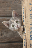 Kitten Looking around the Side of a Wooden Box Photographic Print