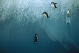 Chinstrap Penguin Jumping Off Blue Iceberg Photographic Print