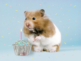 Hamster with Cake and Candle Photographic Print