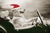 Golden Retriever in Car Wearing Christmas Hat Photographic Print