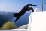 Cat- Black, Jumping Off Wall Photographic Print