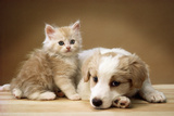 Puppy Lying Together with Kitten Photographic Print