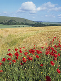 UK Corn Fields and Poppies on South Downs Photographic Print