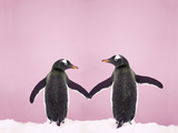 Gentoo Penguin Pair 'Holding Hands' in the Snow Photographic Print