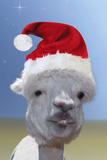 Alpaca Wearing Christmas Hat Impressão fotográfica