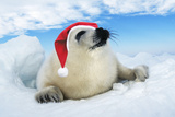 Harp Seal Baby Lying on Ice, Wearing Christmas Hat Photographic Print