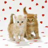 Two Ginger Tabby Kittens on Hearts Background Photographic Print