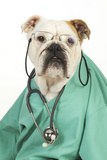 Bullin Vets Scrubs Wearing Glasses and Stethoscope Photographic Print
