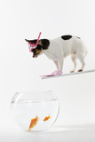 Chihuahua in Scuba Gear over Goldfish Bowl Photographic Print