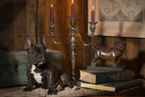 French Bulldog Next to Bronze of Dog and Candlesticks Photographic Print