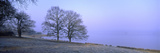 Beech Trees at Lakeside on Frosty Winter Morning Photographic Print