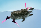 Hedgehog Swimming in Mask Snorkel and Flippers Photographic Print