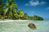 Coconut Floating Ashore on to Tropical Island Photographic Print
