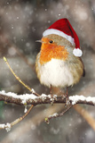 Robin in Falling Snow Wearing Christmas Hat Photographic Print