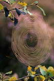 Cobweb in Sunlight Photographic Print