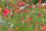 Summer Flower Mix Colourful Summer Flower Mix Photographic Print
